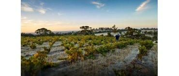 Head Wines (Barossa Valley)