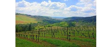 Domaine Lucien Jacob (Hautes Côtes de Beaune)