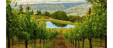 Harlow Ridge (Lodi/Californien)