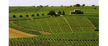 Caruso & Minini (Miljø) (Sicilien)