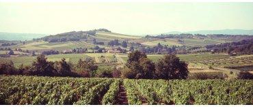Domaine Romy (øko) (Bourgogne Blanc)