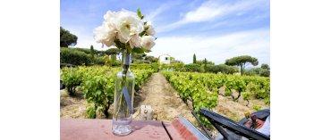 Maison Angelvin (Miljø) (Côtes de Provence)