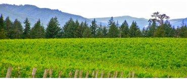 Chateau Bianca (Miljø) (Willamette Valley/Oregon)