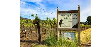 Dancing Crow Vineyards (Miljø) (Lake County/California)