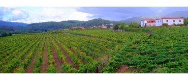 Quinta do Reguengo (Vinho Verde)