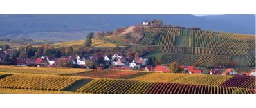 Weingut Kranz (øko) (Pfalz)