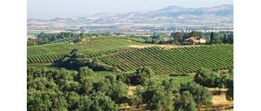 Feudo Disisa (Sicilien)