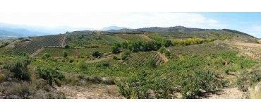 Bodegas Juan Carlos Sancha (øko) (Rioja)
