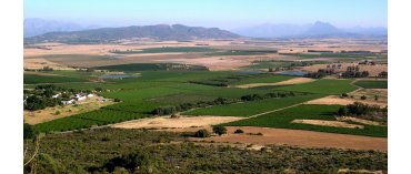 Slent Farms (øko) (Paarl)