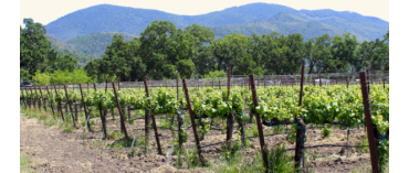Dancing Crow Vineyards (Lake County/California) (øko)